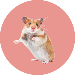 Hamsters y Roedores